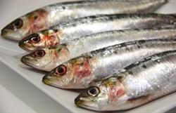 Picture of Fresh Sardines