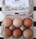 Picture of Maple Farm Eggs x 6