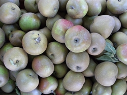 Picture of D'Arcy Spice Apples (500g)