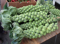 Picture of Brussel Sprout Stalk