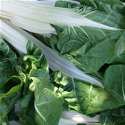 Picture of Green Chard