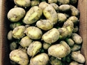 Picture of Ulster Sceptre New Potatoes (500g)