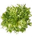 Picture of Frisee Lettuce