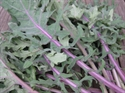 Picture of Red Russian Kale BIG BAG (500g)