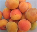Picture of Tiptree Apricots BULK BUY (1kg)