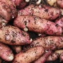 Picture of Pink Fir Apple Potatoes (1kg)