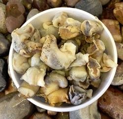 Picture of Whelks in vinegar (150g)