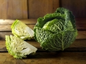 Picture of Savoy Cabbage