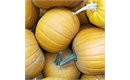 Picture of Pumpkin, whole (apx 3kg)