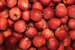 Picture of Kentish Gala Apples