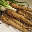 Picture of Salsify (500g)