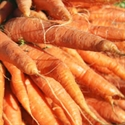 Picture of Suffolk Carrots, Juicing (5kg)