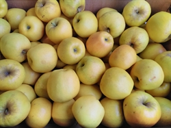 Picture of Opal Apples (1kg)