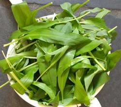 Picture of Wild Garlic (50g)