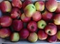 Picture of Crimson Crisp Apples (1kg)