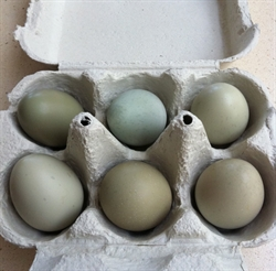 Picture of Pheasant Eggs x 6