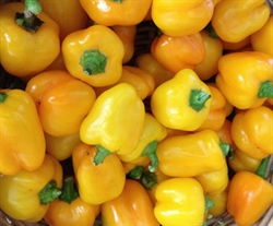 Picture of Yellow Peppers