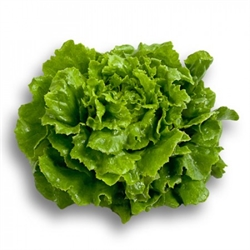 Picture of Crisphead Lettuce