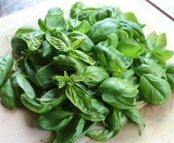 Picture of Fresh Basil