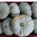 Picture of Crown Prince Squash (apx. 1.2kg @ £2.50 / kg)