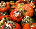 Picture of Turkish Turban Squash (apr. 800g @ £2.50 / kg)