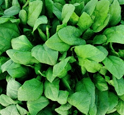 Picture of New Season Annual Spinach BIG BAG (500g)