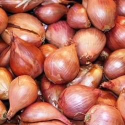 Picture of Pickling Onions