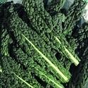Picture of Cavolonero Kale BIG BAG (500g)