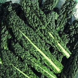 Picture of Cavolonero Kale