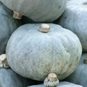 Picture of Crown Prince Squash (apx 3kg - £1.50/kg )