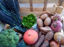 Picture of Organic Seasonal Fruit & Veg Box, Large