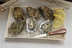 Picture of Maldon Rock Oysters x 6