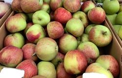 Picture of Braeburn Apples