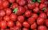 Tiptree Strawberries