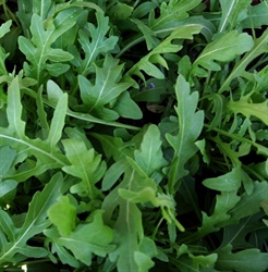 Picture of Wild Rocket