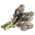 5 x Baby Purple Artichoke