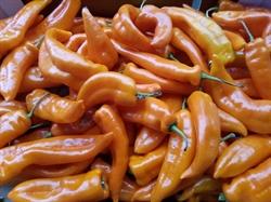 Picture of Orange Romano Peppers