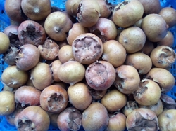 Picture of Essex Medlars