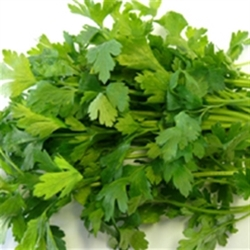 Picture of Flat Parsley