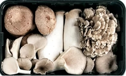 Picture of Mixed Woodland Mushrooms