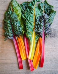 Picture of Rainbow Chard