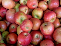 Picture of Ida Red Apples