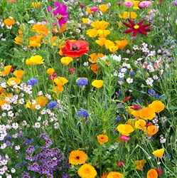 Picture of Annual Bee Mix Seeds