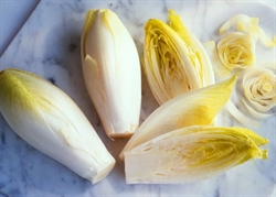 Picture of White Chicory