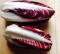 Picture of Red Chicory