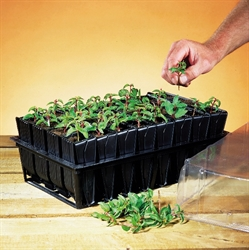 Picture of Rootrainer, 1 pack of 32 cells
