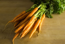 Picture of Carrots, bunched