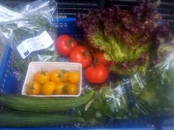 Picture of Summer Salad Box, medium