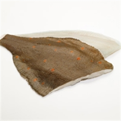 Picture of Plaice Fillets