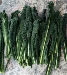 Picture of Cavolonero Kale